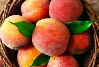 manfaat buah peach untuk kesehatan